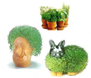 Chia Pets (or current Adam's head ;))