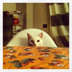 Nut at table in Play Room